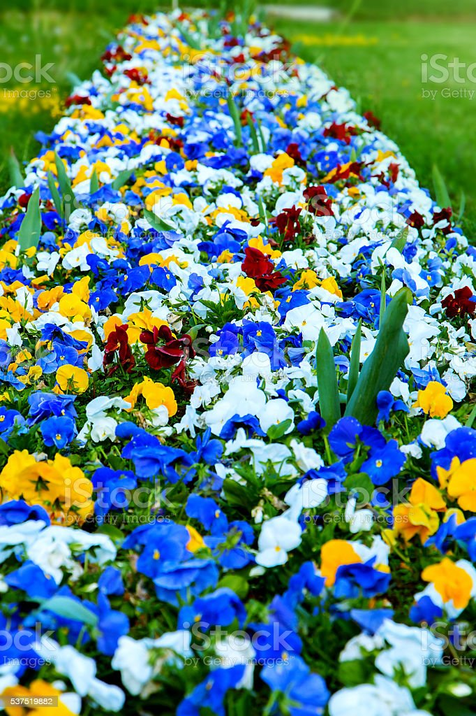 flowerbed of colorful flowers stock photo