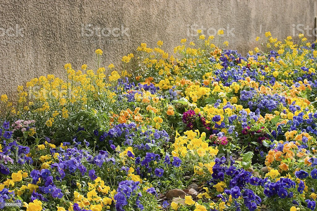 Flowerbed royalty-free stock photo