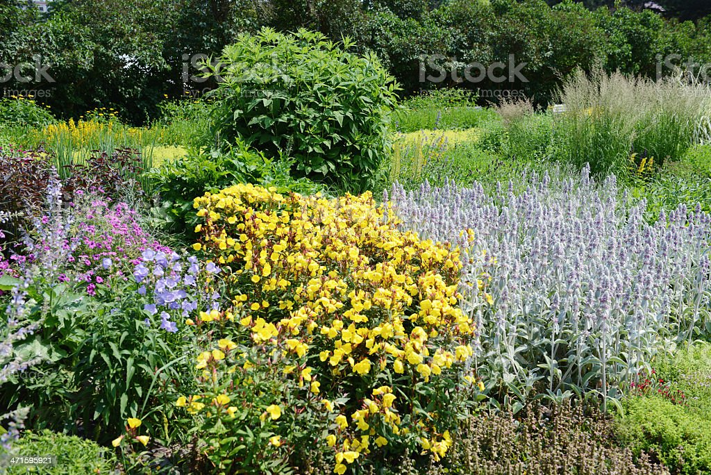 Flowerbed with Lambs Ear evening primrose and cranesbills stock photo