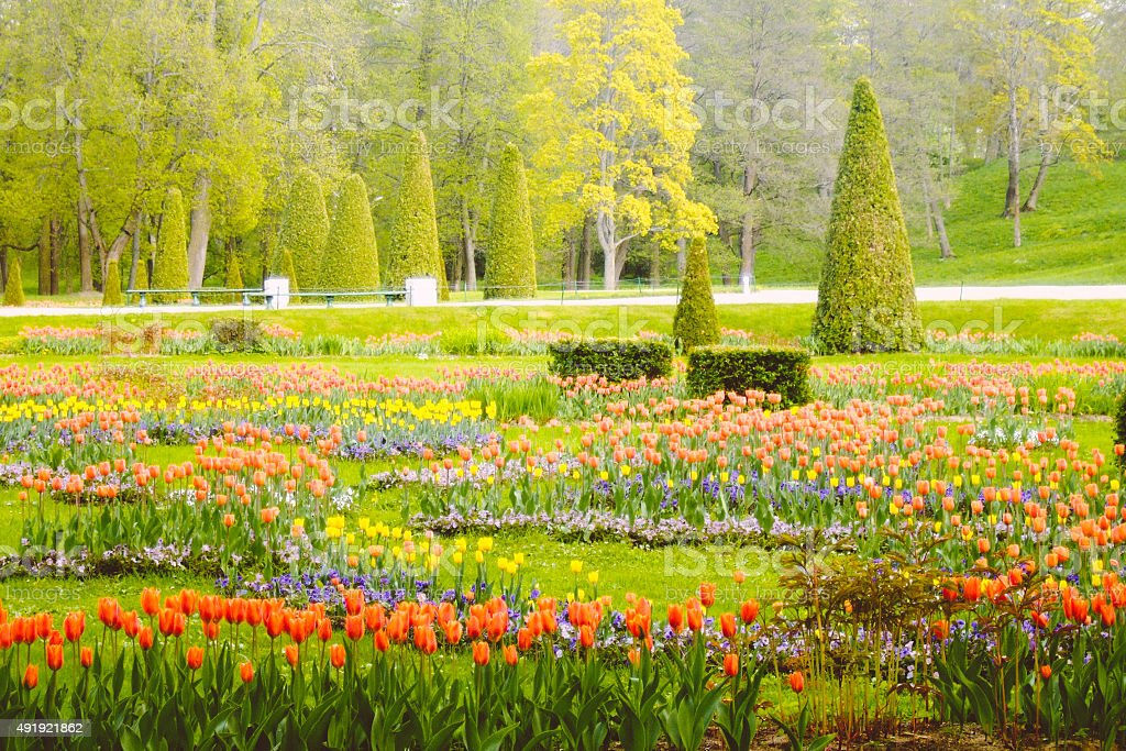 Flowerbeds with many tulips in park, Petergof, Russia stock photo