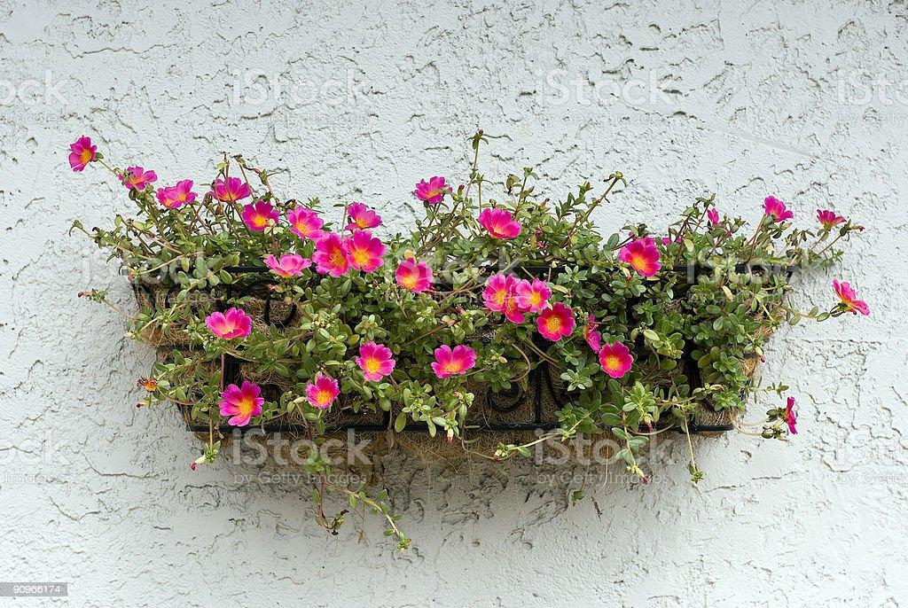 Flowerbox stock photo