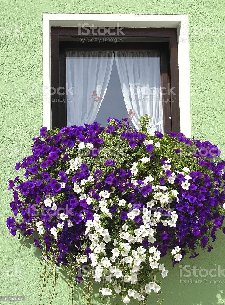 Flowerbox window stock photo