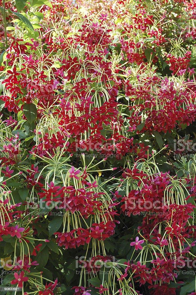 Flower-cascade stock photo