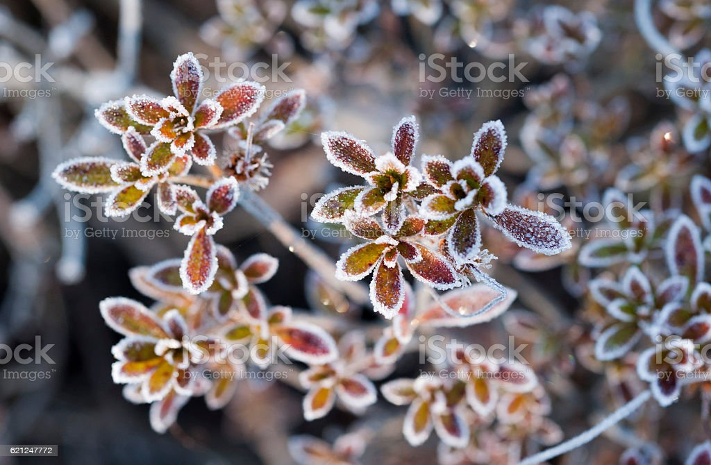 Flowered frost stock photo
