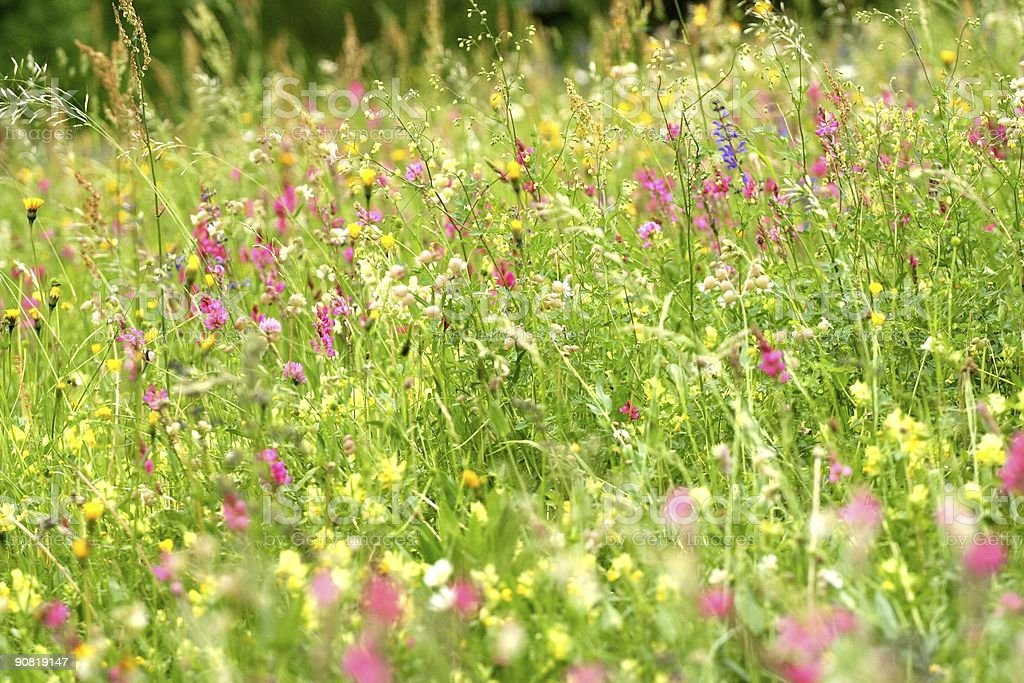 Flowered grass, a pleny of wildflowers stock photo