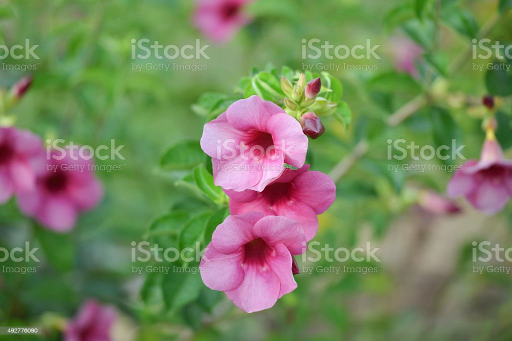 Flower/flower royalty-free stock photo