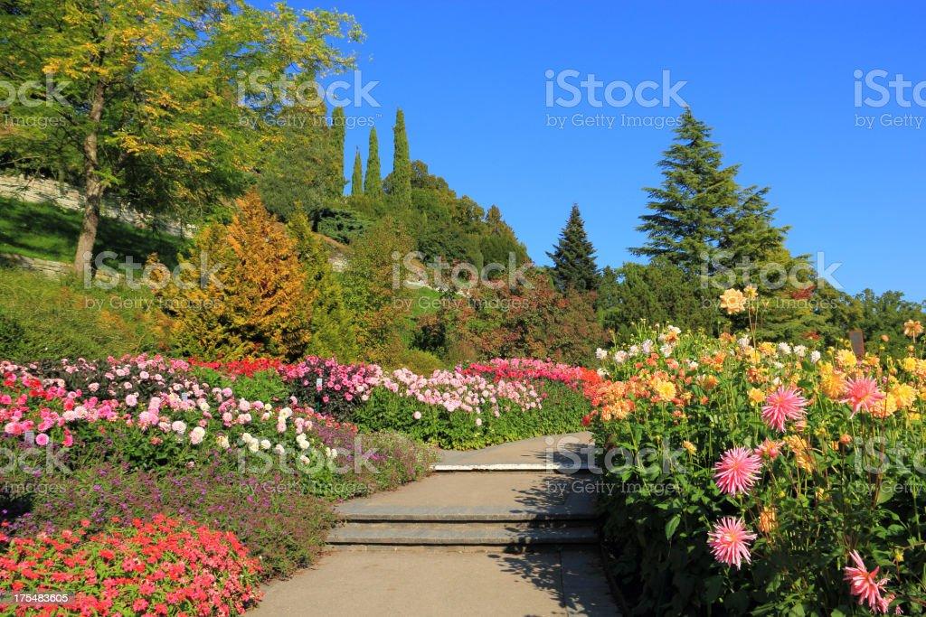 Flowergarden with Dahlias stock photo