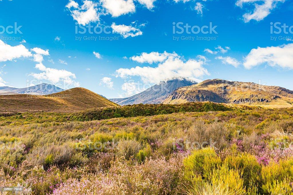 Flowering alpine landscape against the distant peaks stock photo