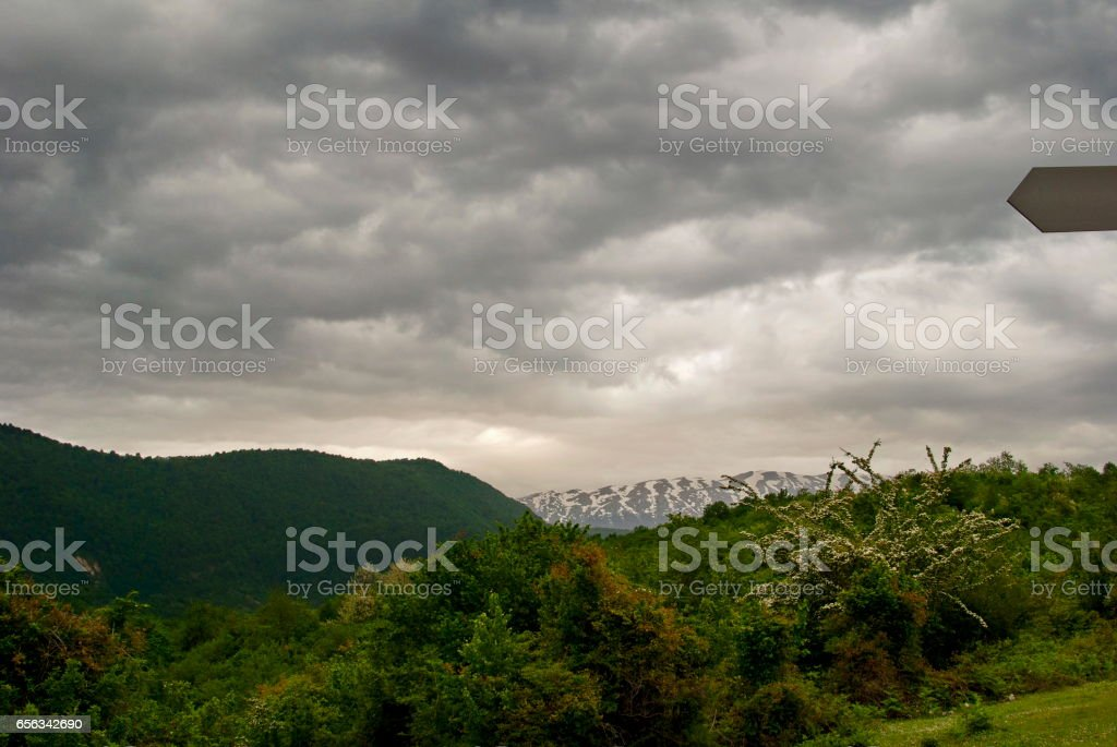 Flowering bush on the background of mountains and dramatic sky stock photo