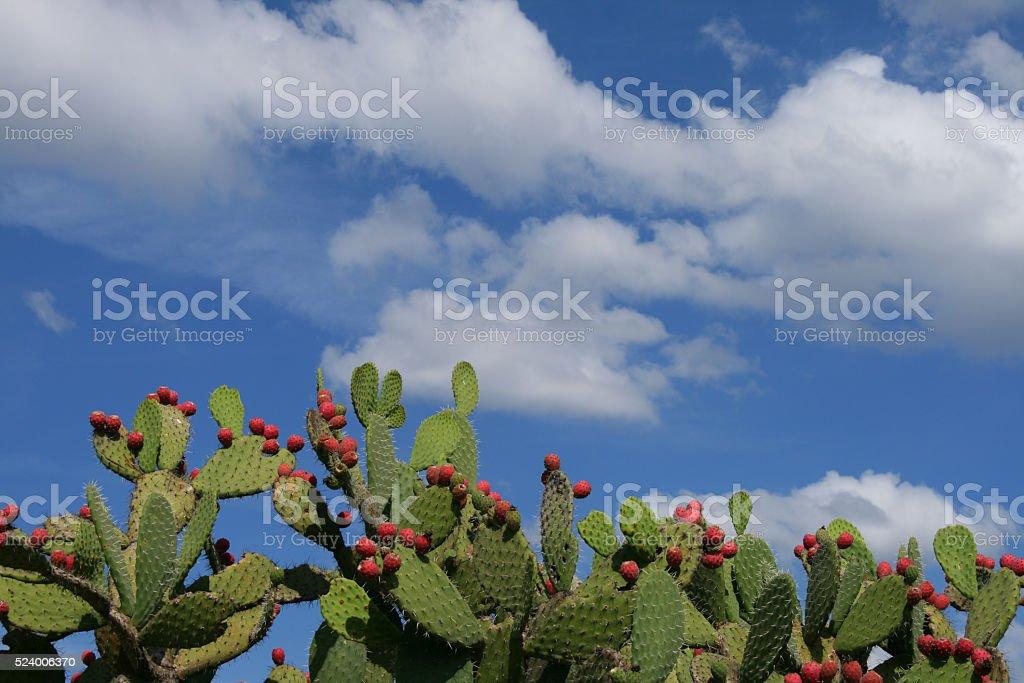 flowering cactus stock photo
