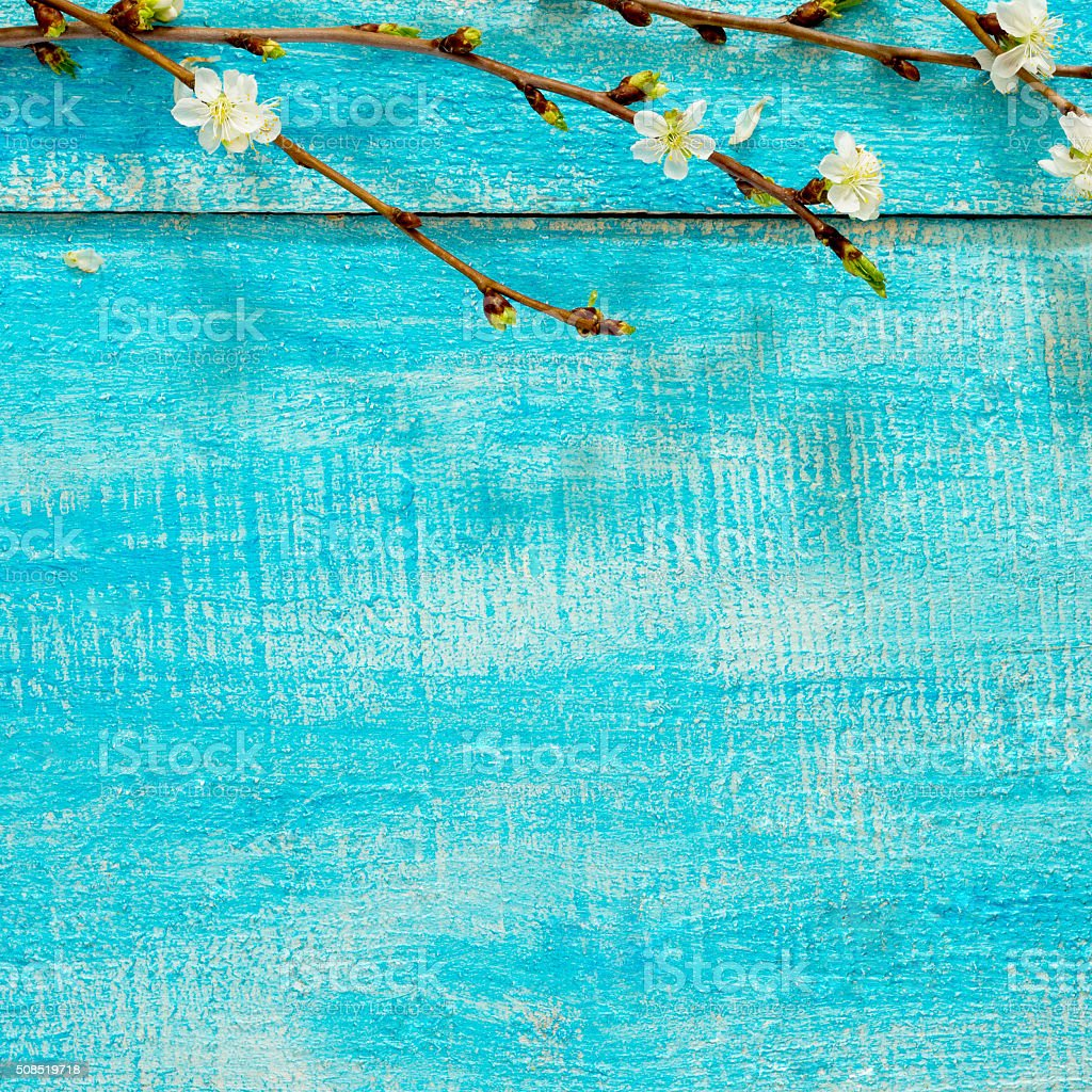 Flowering cherry branch on a wooden background, place for text stock photo