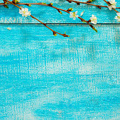 Flowering cherry branch on a wooden background, place for text