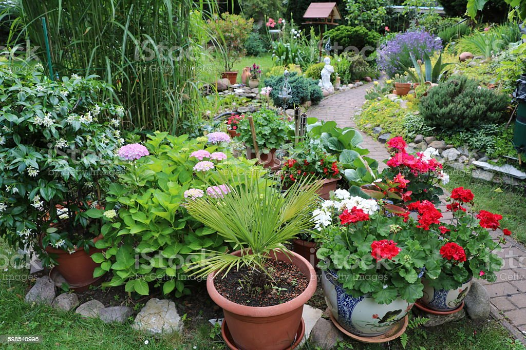 Flowering Garden in summer, Germany stock photo
