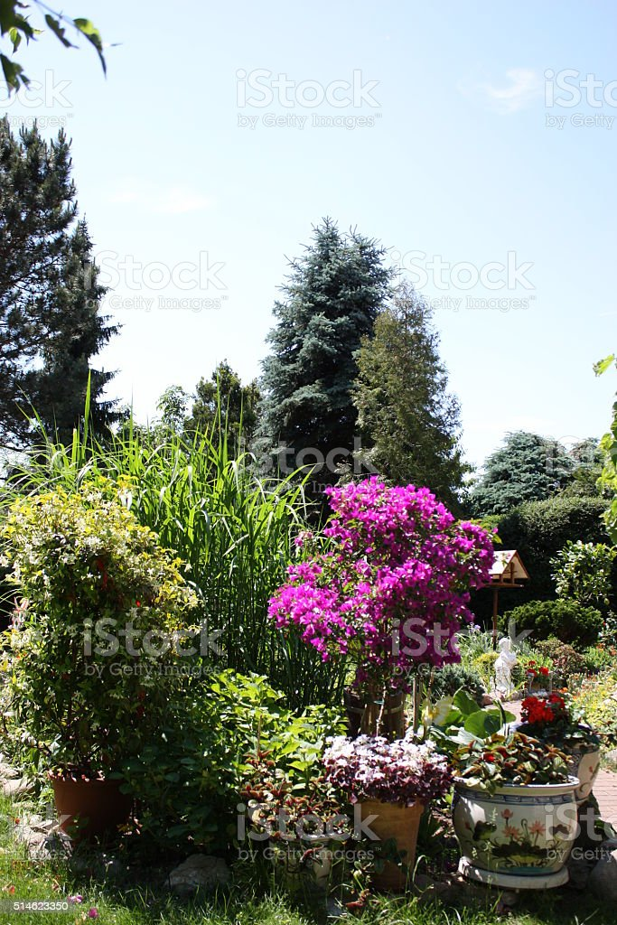Flowering Garden in summer stock photo