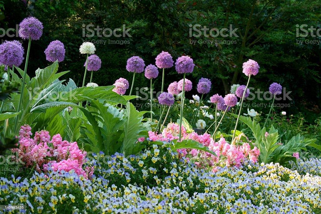 flowering garden in the spring stock photo
