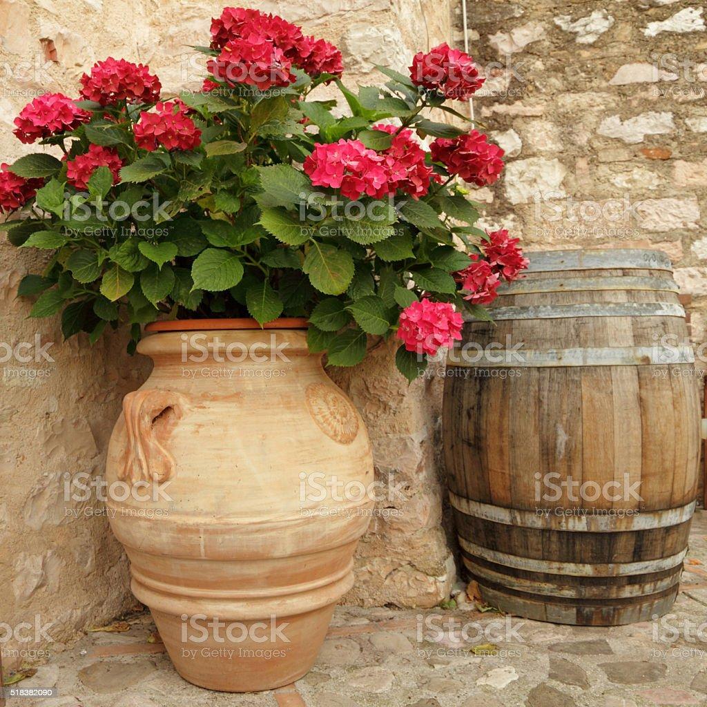 flowering hortensia on italian nook stock photo