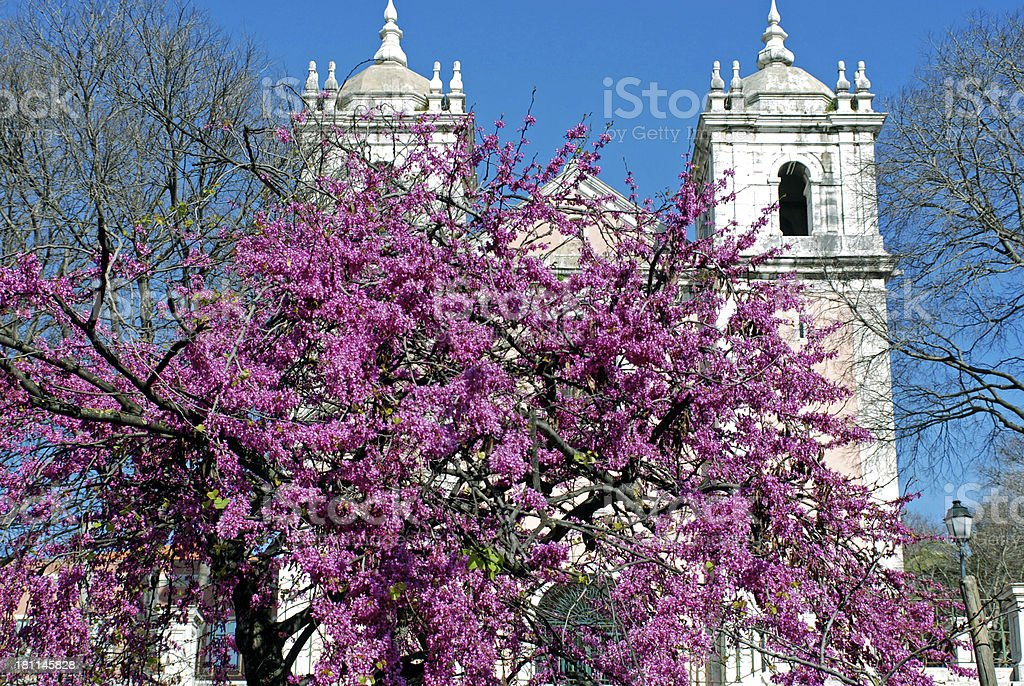 Flowering jacaranda tree and church in Lisbon royalty-free stock photo