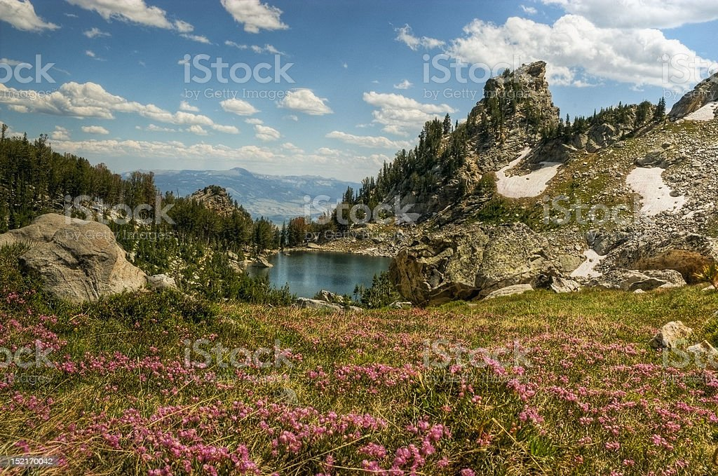 Flowering Lupine Meadows and Amphitheatre Lake, Grand Tetons royalty-free stock photo