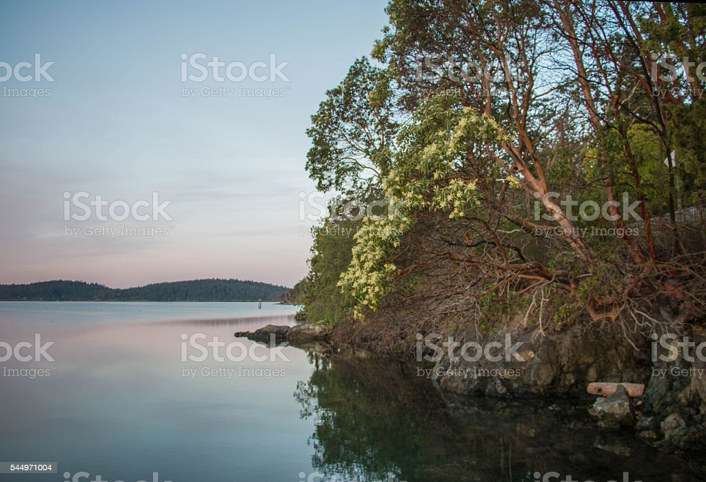 Flowering madrone tree weeping over tranquil water stock photo
