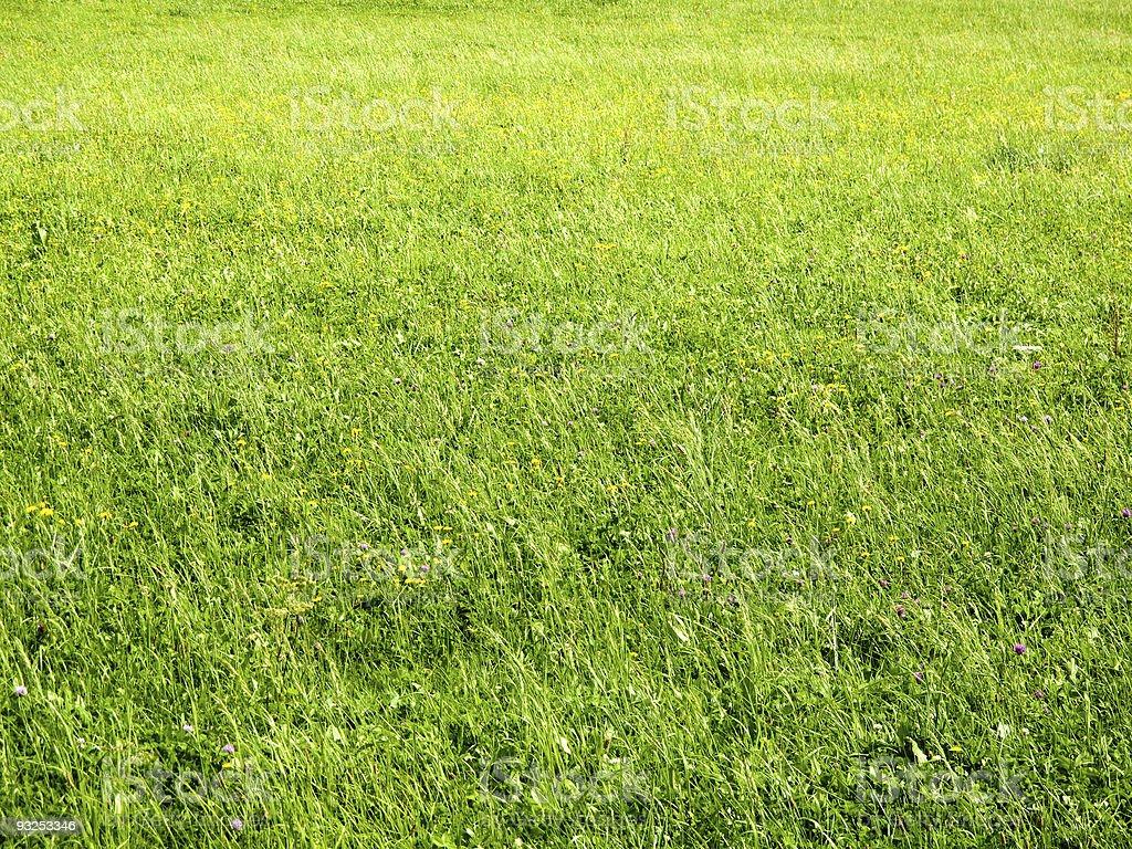 Кизил meadow Стоковые фото Стоковая фотография