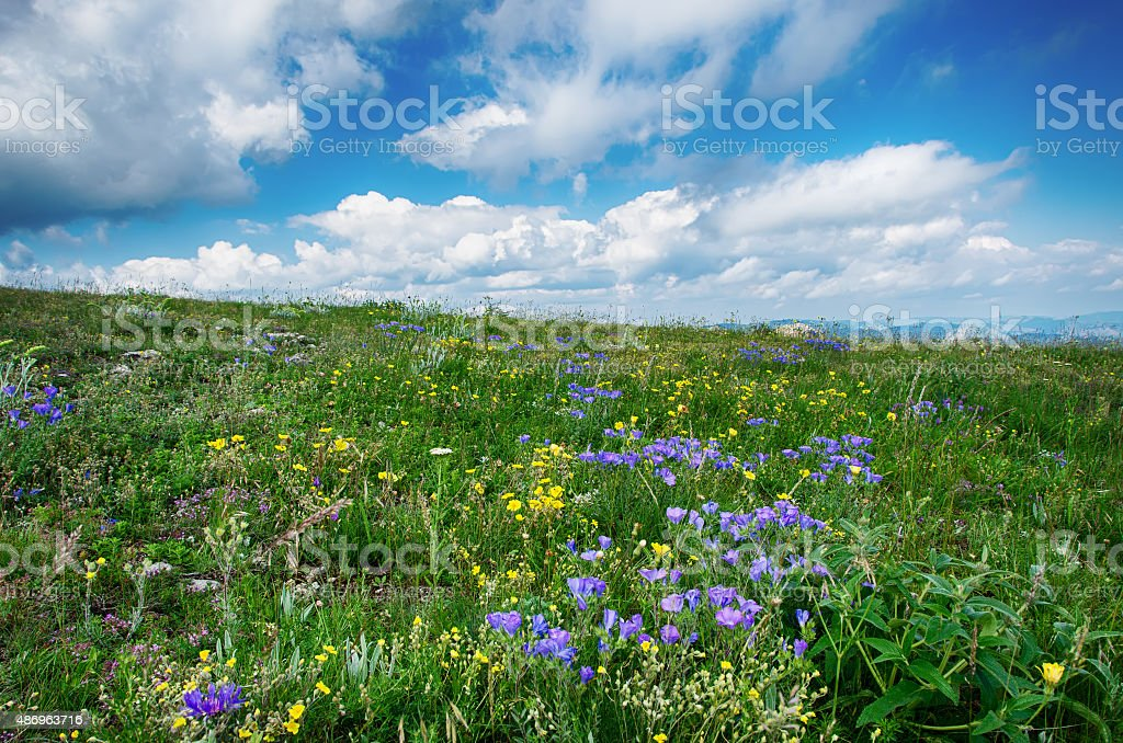 flowering meadow with mountains in the background and cloudy sky stock photo