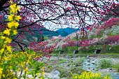 Flowering peach trees and mountains and rivers