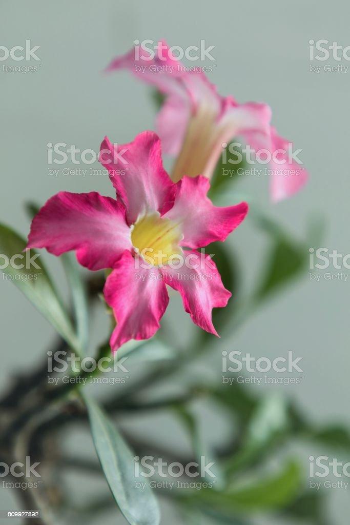 Flowering Pink Plant stock photo