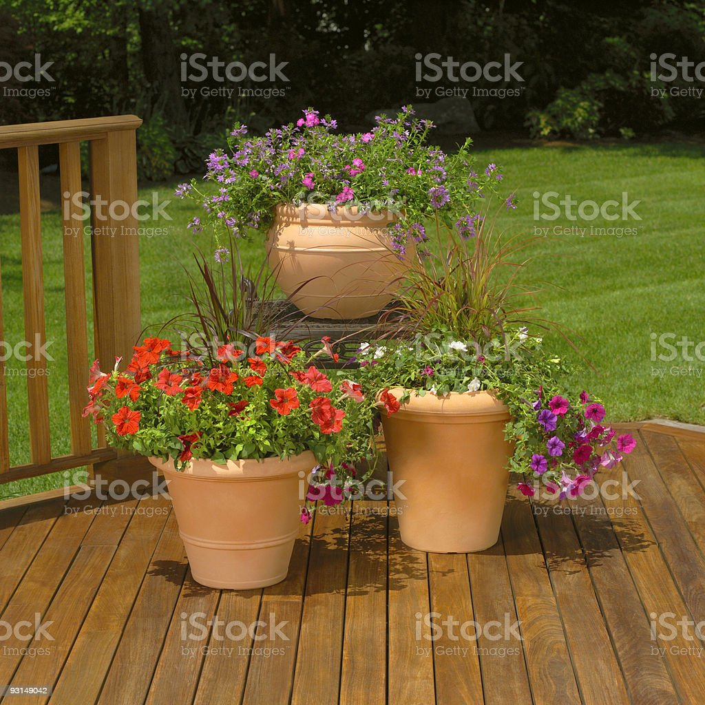 Flowering planters on wood deck; summer backyard view royalty-free stock photo