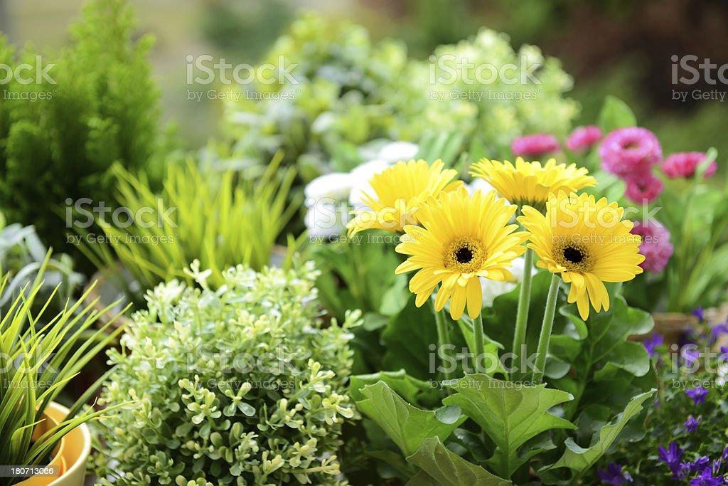 flowering plants royalty-free stock photo