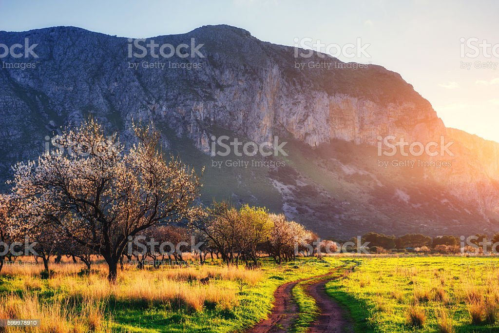 flowering trees at sunset in the mountains stock photo