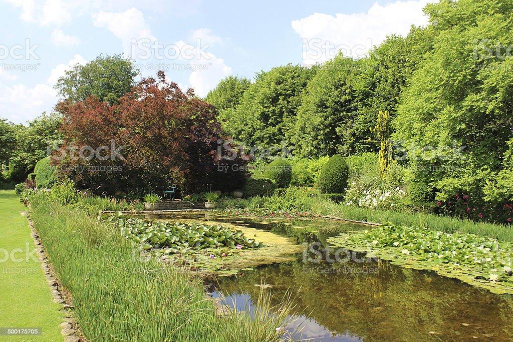 Flowering water lilies, lily pond, ornamental water garden, smoke bush stock photo