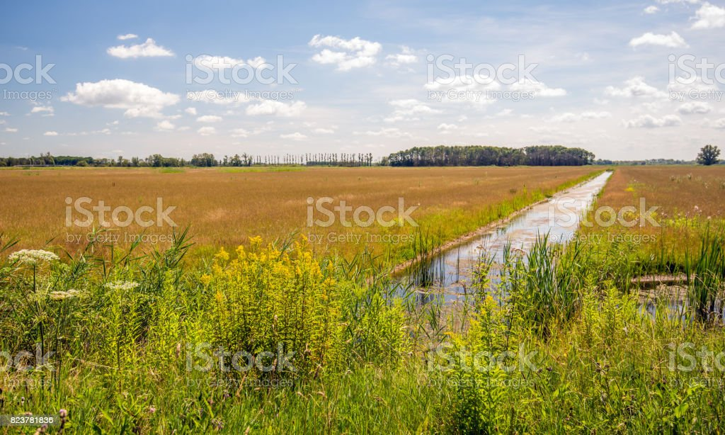 Flowering wild plants and reeds on the edge of a long ditch in a Dutch nature reserve stock photo