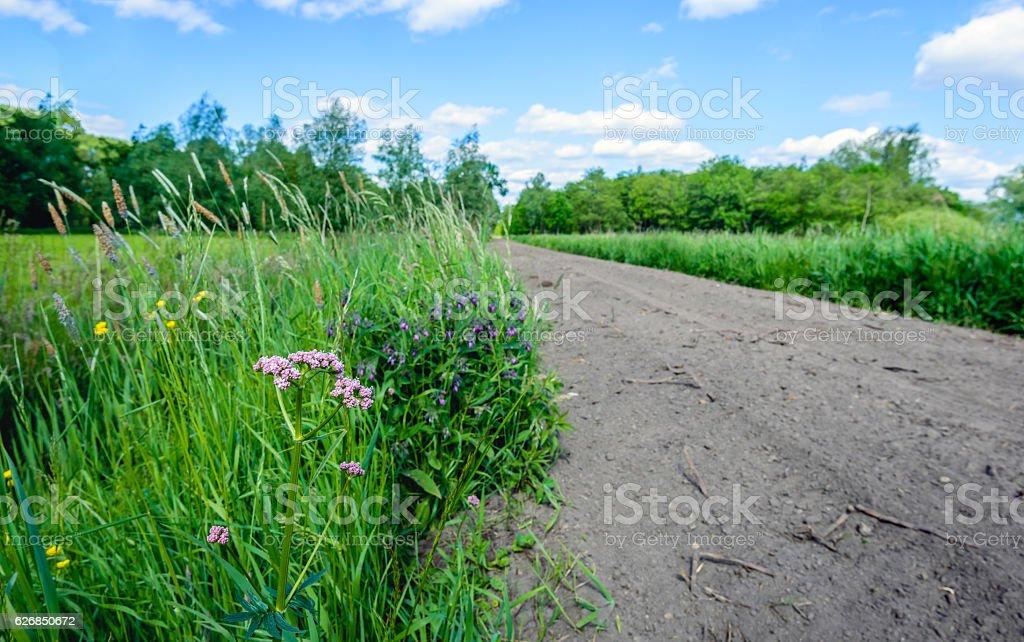 Flowering wild plants next to a sandy path stock photo
