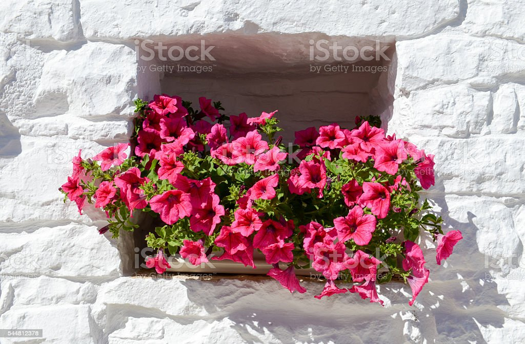 Flowerpot in a window at Alberobello stock photo