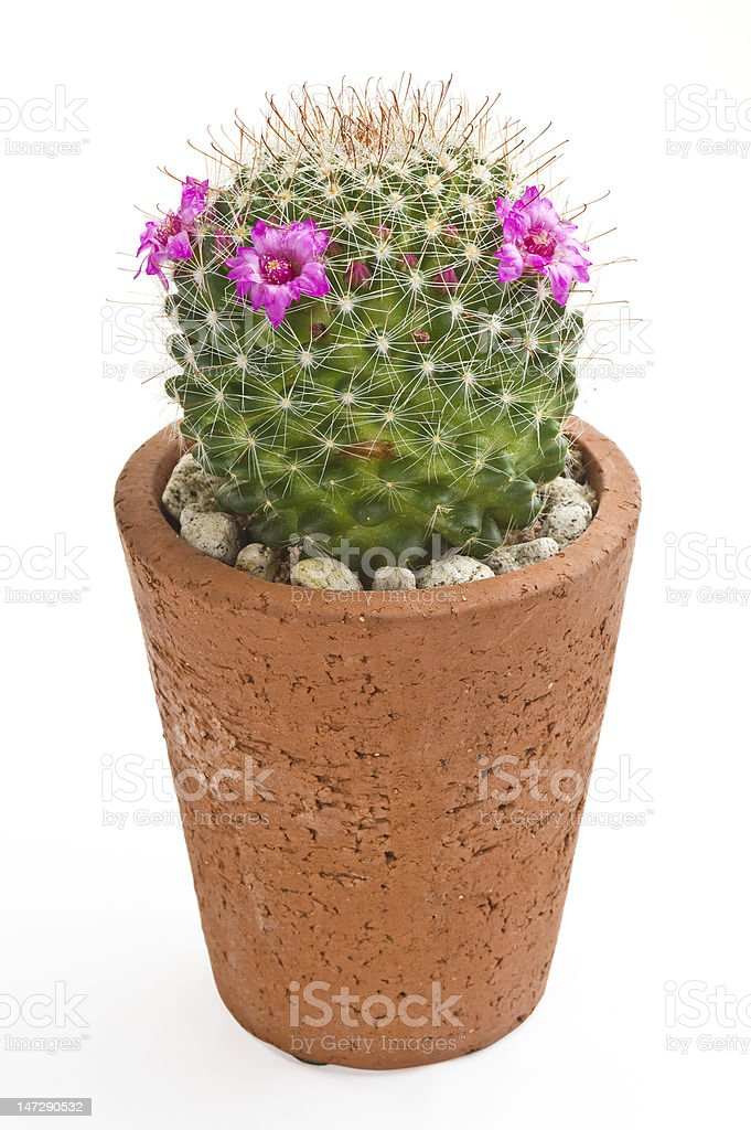flowerpot royalty-free stock photo