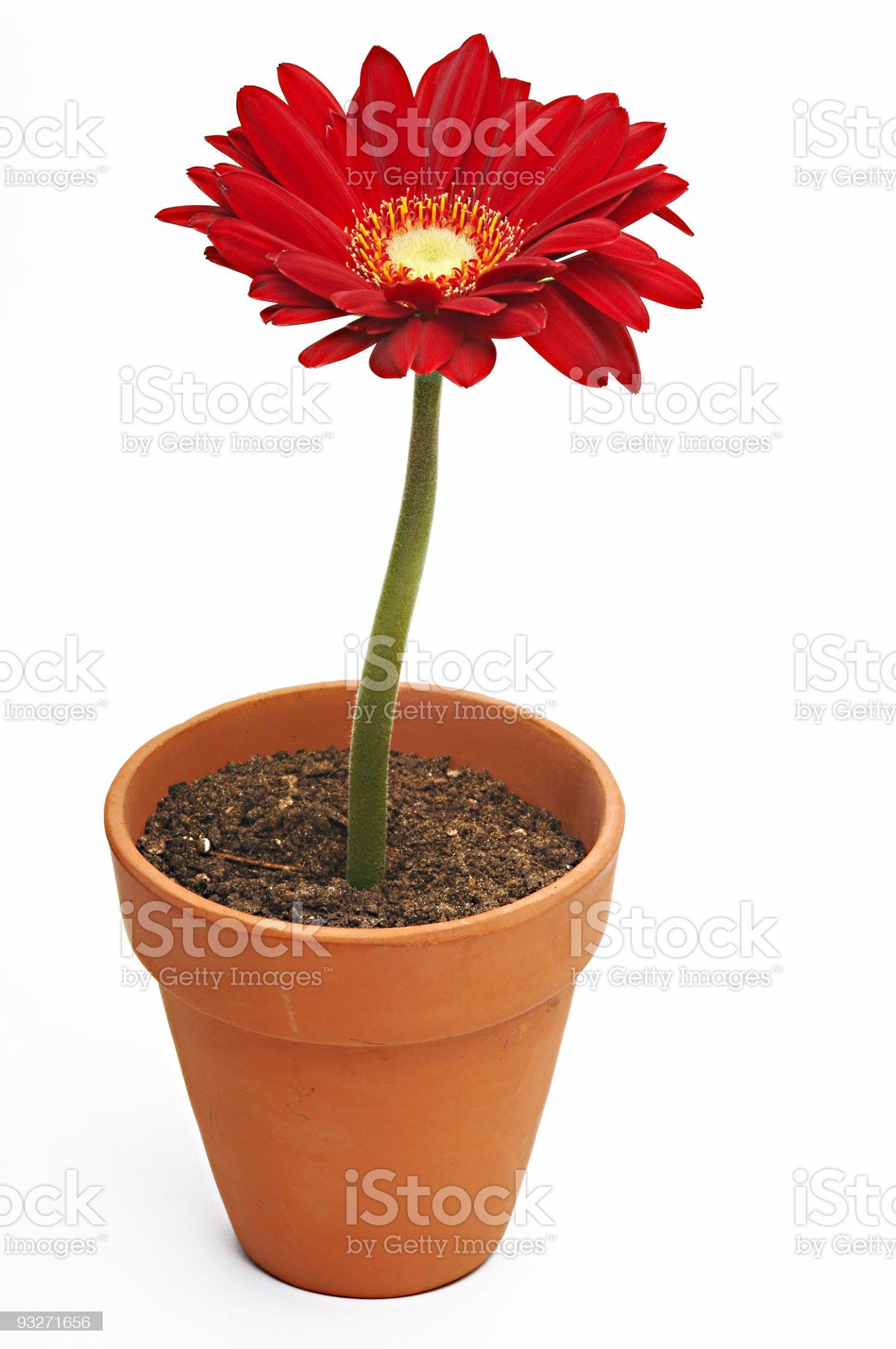 Flowerpot royalty-free stock photo