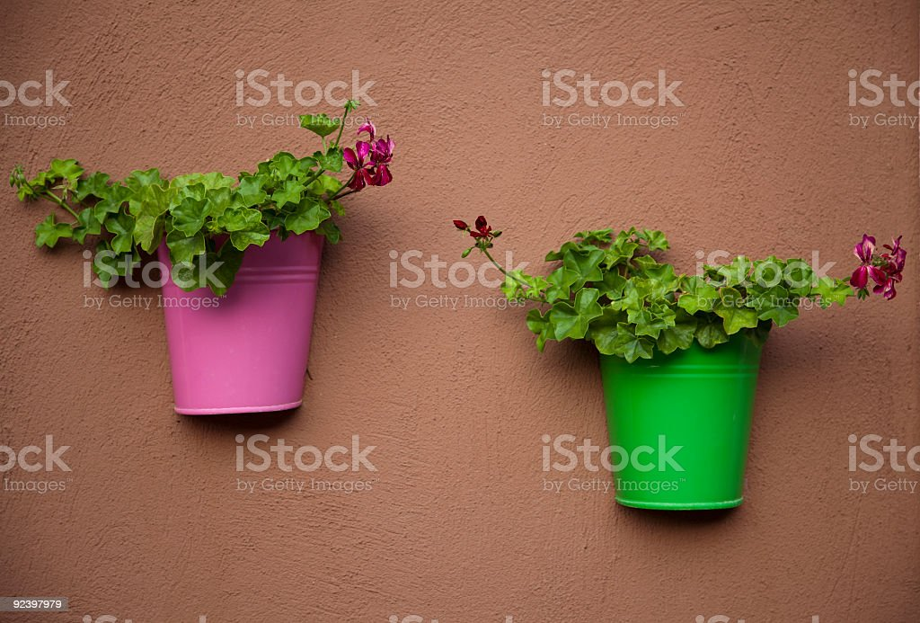 flowerpots in the wall royalty-free stock photo