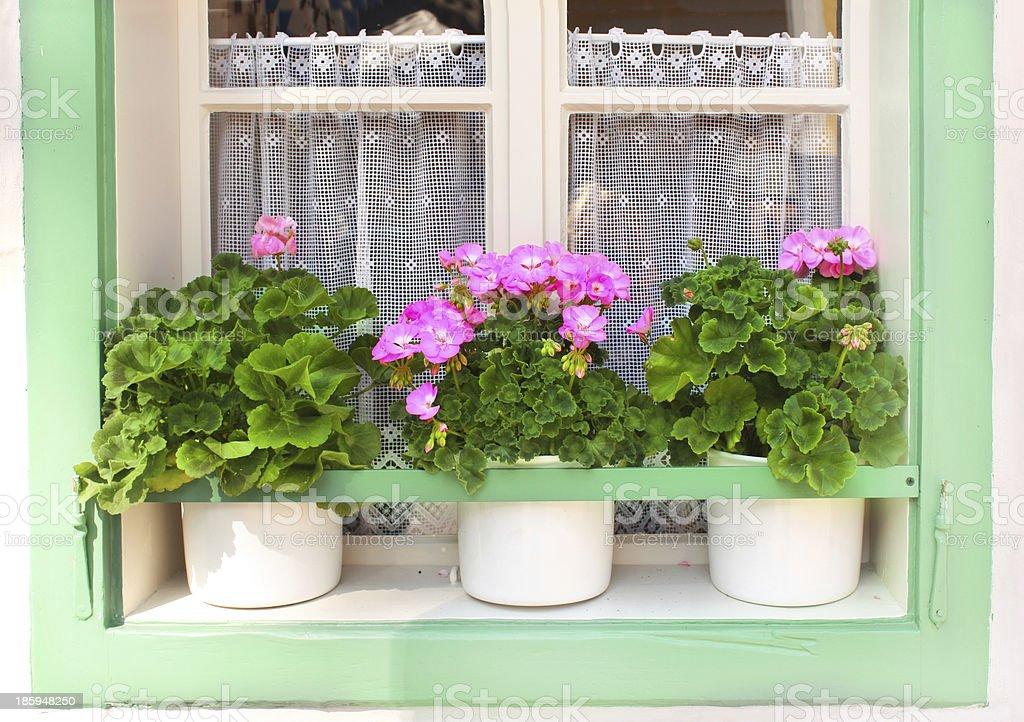 Flowerpots with geranium royalty-free stock photo