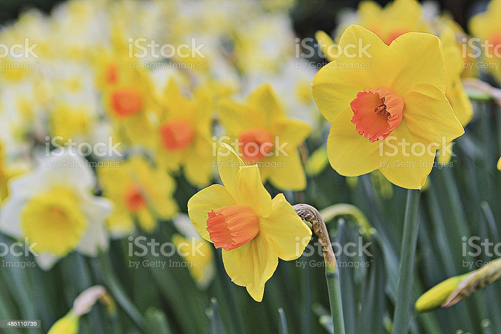 Flowers 1 stock photo