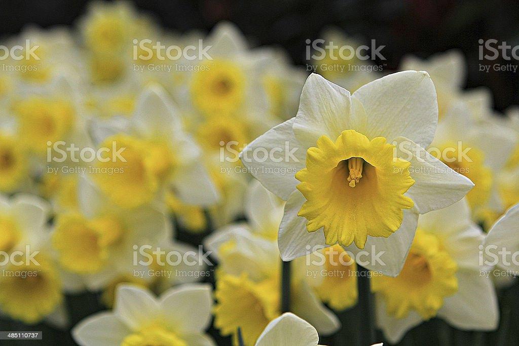 Flowers 2 stock photo