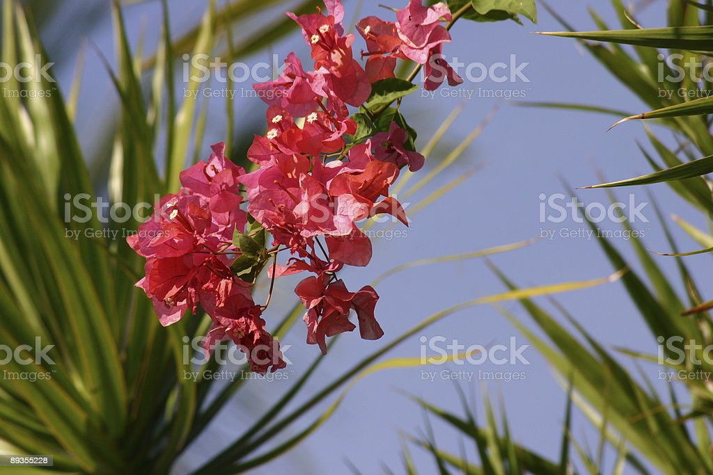 Flowers against sky royalty-free stock photo
