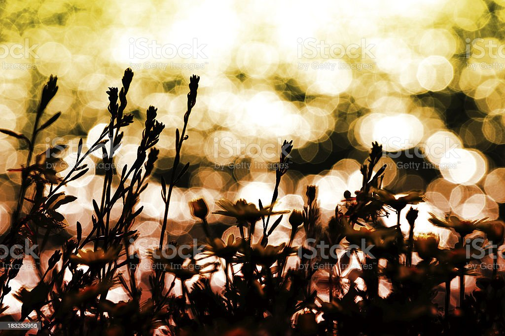 Flowers against sunlit sea with reflections royalty-free stock photo