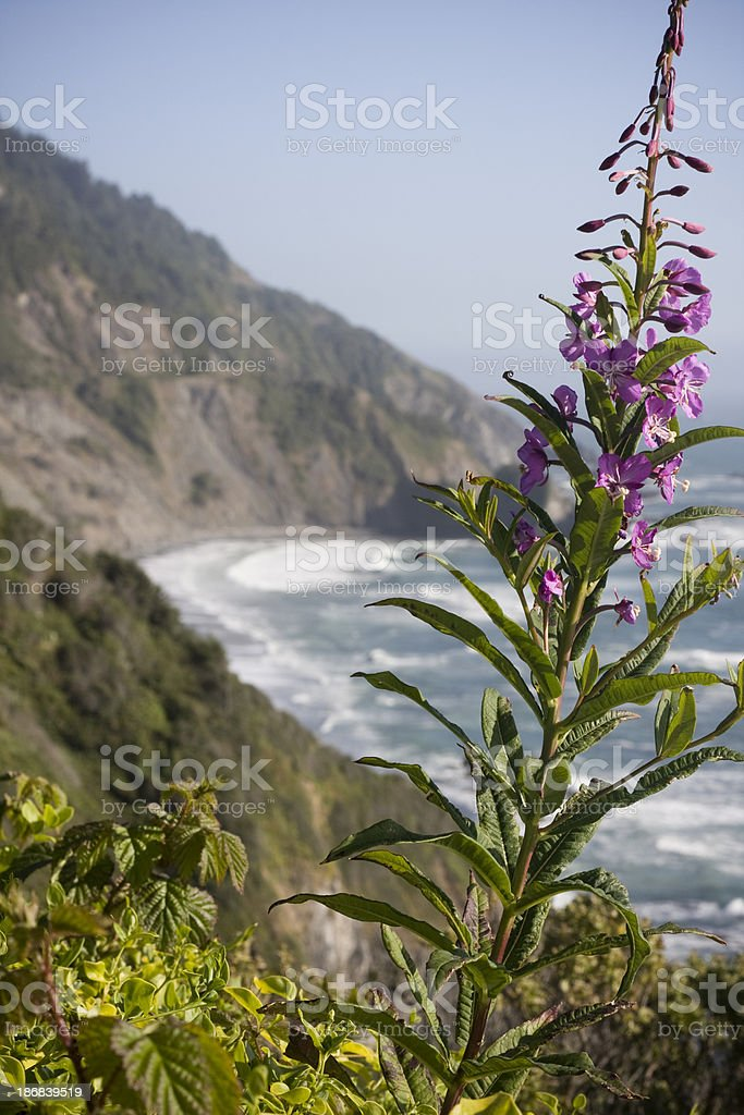 Flowers along Coastline stock photo