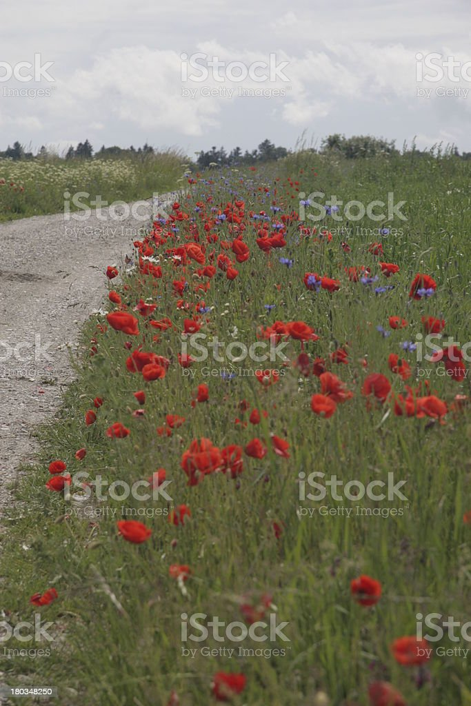 flowers an grasses royalty-free stock photo