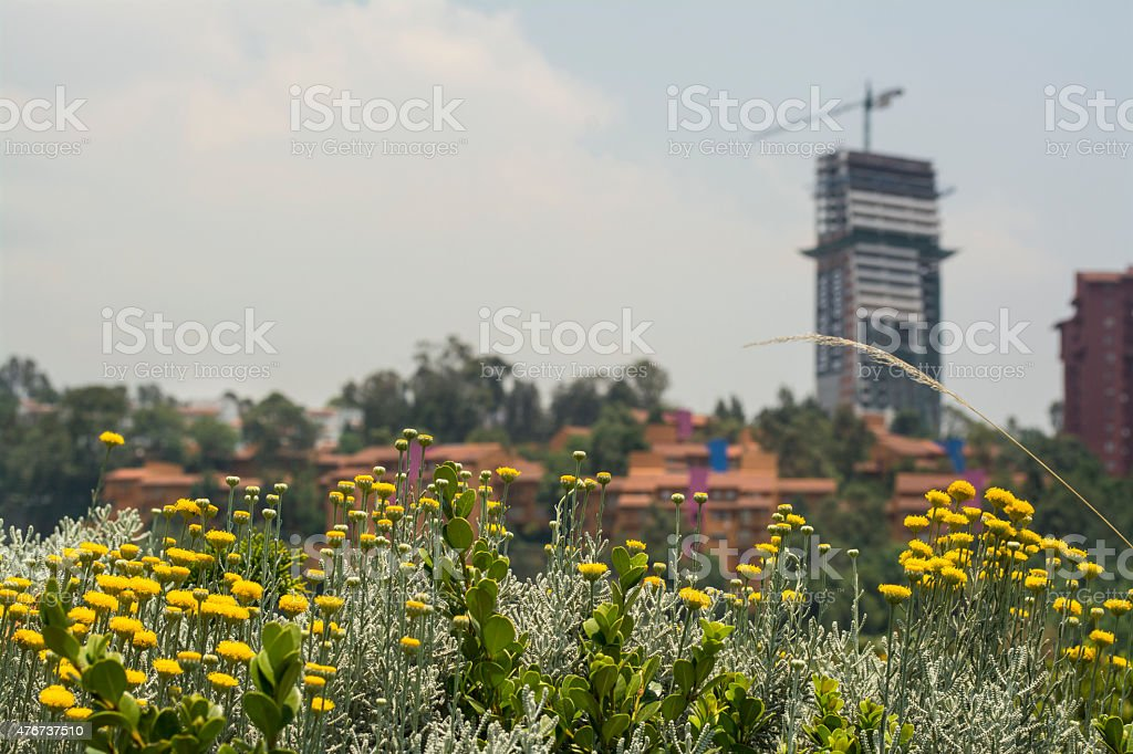 Flowers and Buildings stock photo