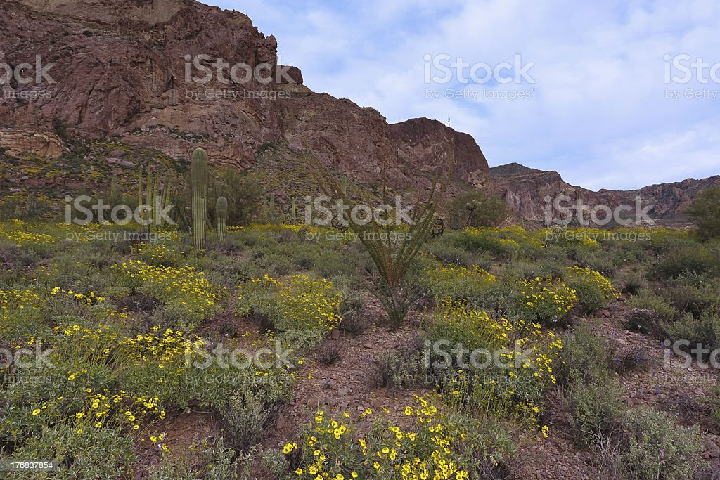 Flowers and Cacti royalty-free stock photo