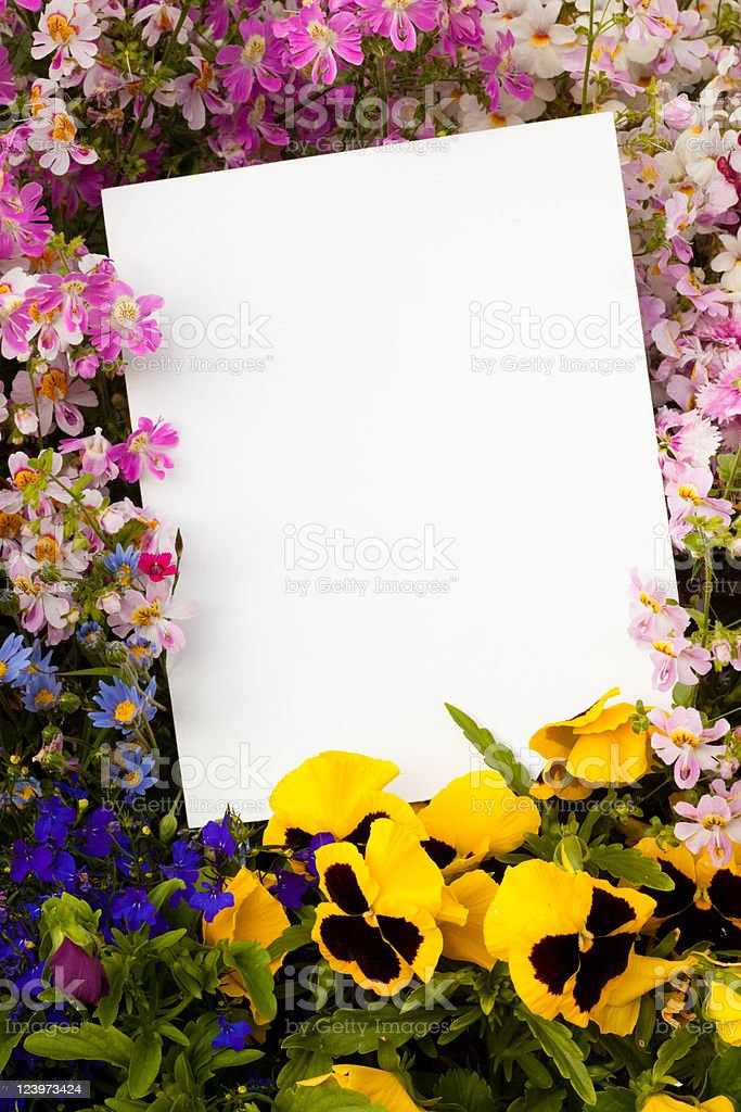 Flowers and Copyspace royalty-free stock photo