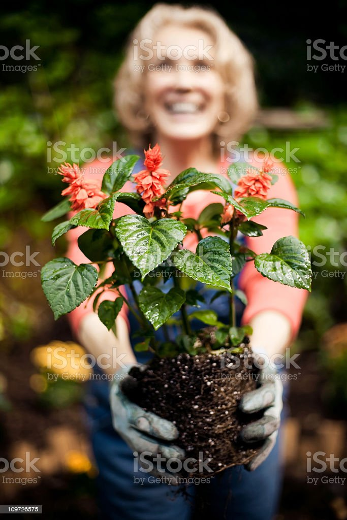 Flowers and Dirt royalty-free stock photo