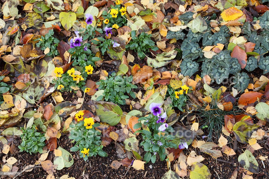 Flowers and fallen leaves stock photo