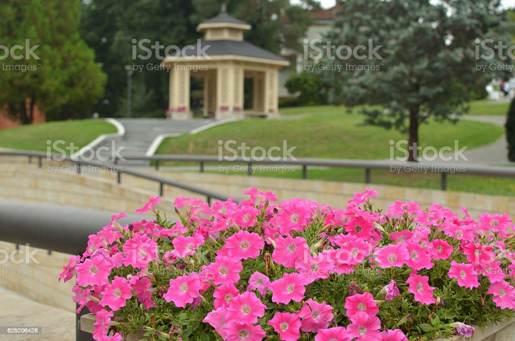 Flowers and Gazebo stock photo